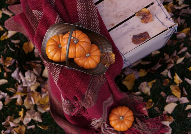 Pumpkin-SimiJois